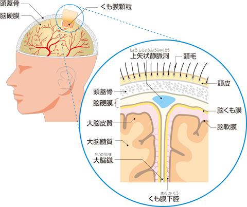 脳を包む膜