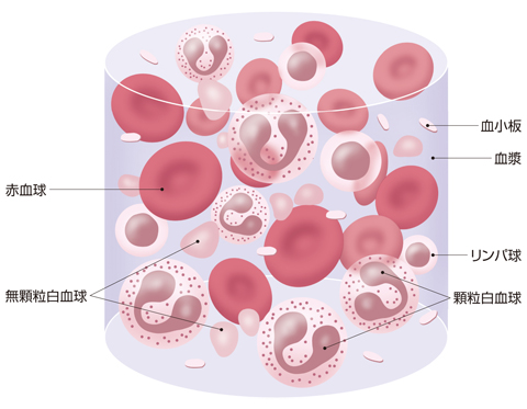 血液の成分