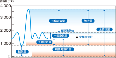 肺容量の区分
