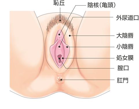 女性外陰部