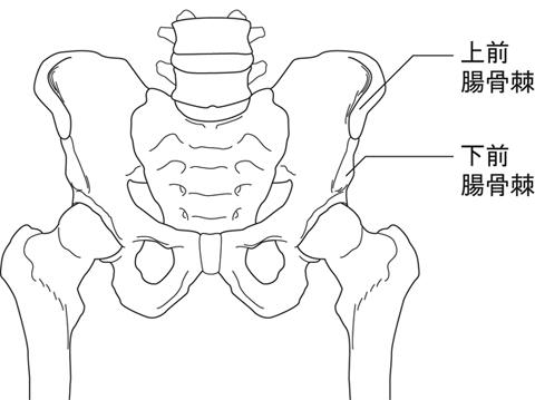 上・下前腸骨棘裂離骨折とは - ...