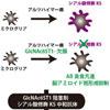 """アルツハイマー病発症に関わる""""糖鎖""""を発見"""