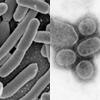 こんなに違う、ウイルスと細菌