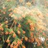 2014年春シーズンのスギ&ヒノキ花粉予測は?
