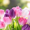 「花を見ると癒やされる」その効果は本当?