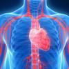 集中連載・移植医療 ~臓器提供の実際はどうなっているか~ 第5回 どのようにして、私達は臓器を提供するのか(2)心停止下臓器提供